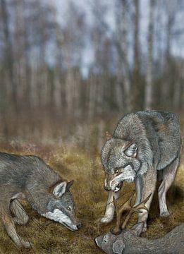 Wolven, Canis lupus lupus, met prooi van Urft Valley Art