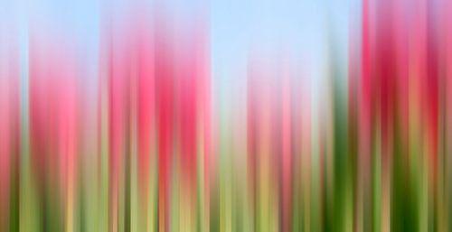 Tulpen Tinktur