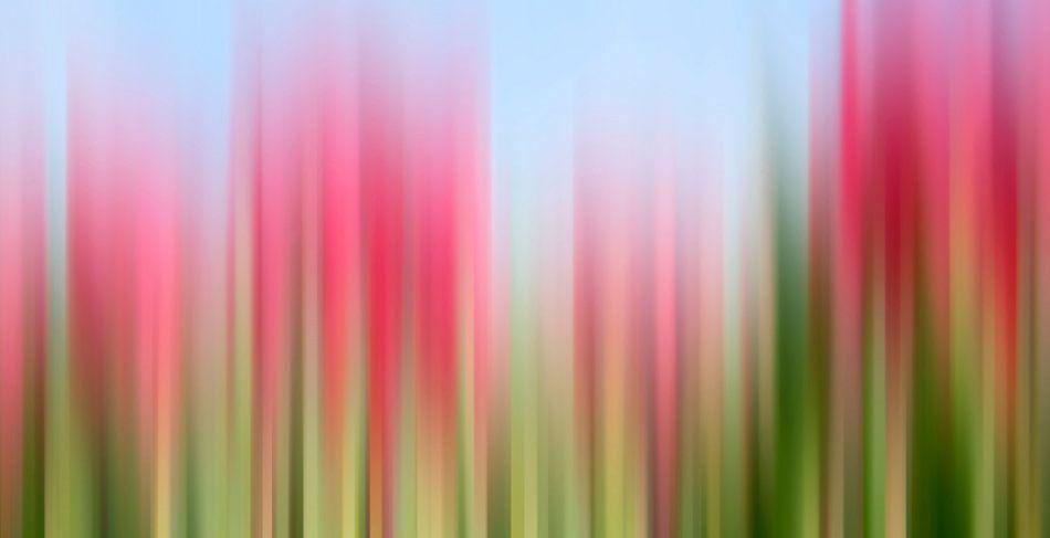 Tulpen tinctuur