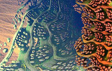 Zandveld. van Frank Heinz