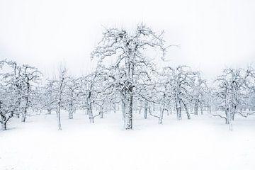 Boomgaard in wintertooi van Jonathan Vandevoorde