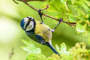 hangend in een boom van claes touber