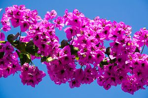 Blumen in der Türkei von Rob Bleijenberg
