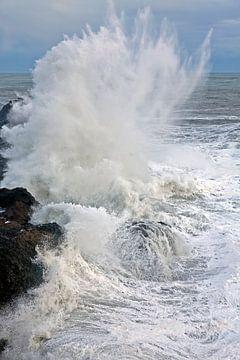 Wilde Zee van Anton de Zeeuw