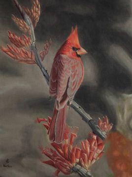 Cardinal rouge sur sabrina van lijsdonk