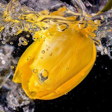 Gele tulp in sprankelend water van Jenco van Zalk