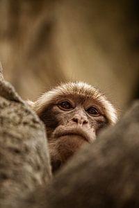 Affe von Kim Reuvekamp