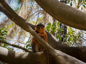 Nieuwsgierig aapje van Denise Mol