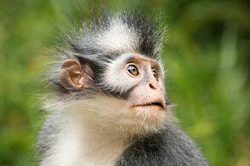 Thomaslangoer - Sumatra, Indonesië sur Martijn Smeets