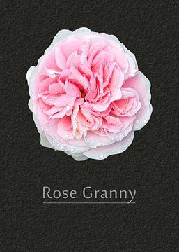 Rose Granny van Leopold Brix