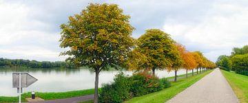 Laan op de Donau bij Tulln van Leopold Brix