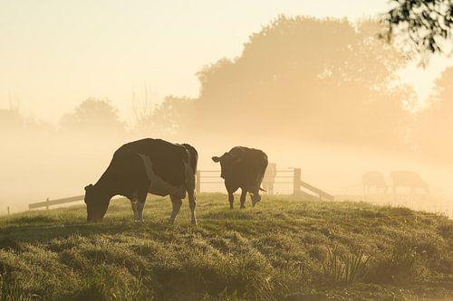 Koeien in de mist. van Sander van der Werf