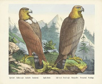 Goudarend en Steenarend, Firma Joseph Scholz, 1829 - 1880