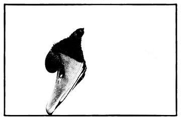 Zwaan close-up 1  film noir van Ernst van Voorst