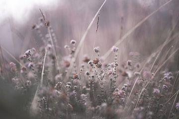 Blumen Teil 164