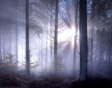 Märchenhafte Sonnenstrahlen mit Nebel im Wald von Frahan von Peschen Photography