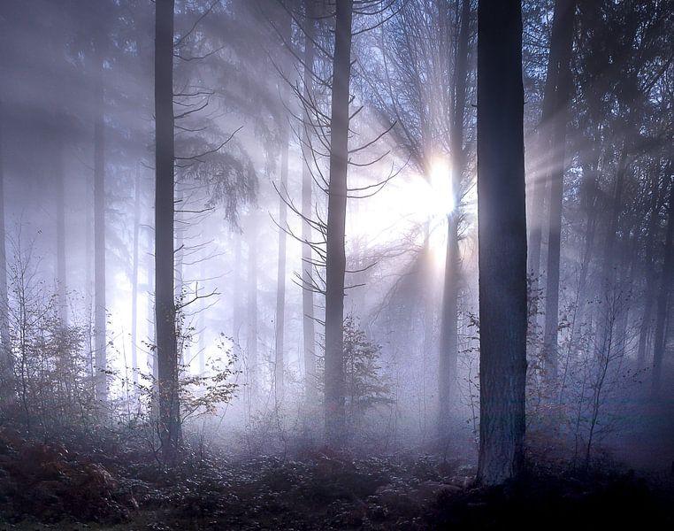 Sprookjesachtige zonnestralen met mist in het bos van Frahan van Peschen Photography