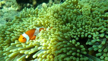 Finding Nemo in Bali van