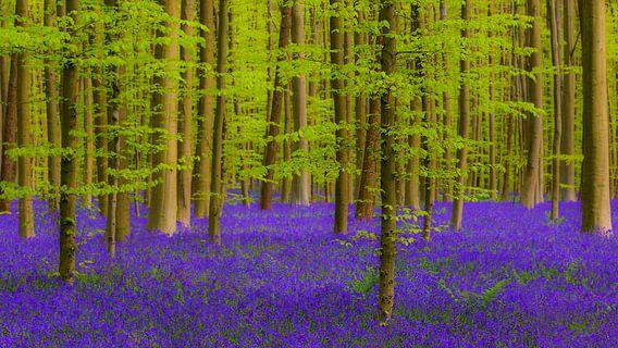 Purple carpet van Brian Decrop