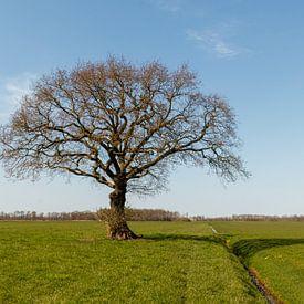 Nur ein Baum. von Anjo ten Kate