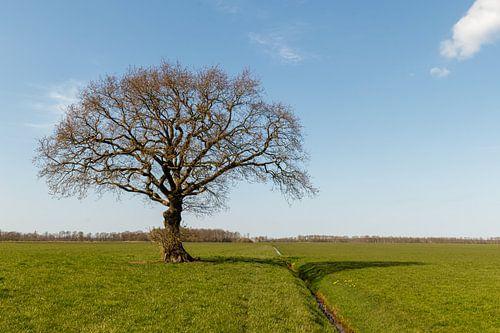 Nur ein Baum.