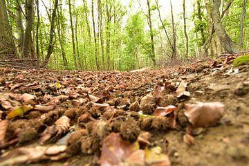 Waldweg im Herbst von Philipp Klassen