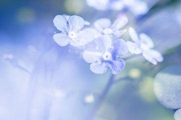Zarte Frühlingsfarben von Irene Lommers