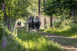 Paard en wagen in het bos