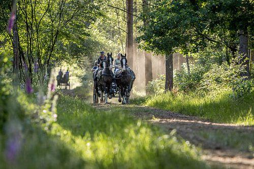 Paard en wagen in het bos van