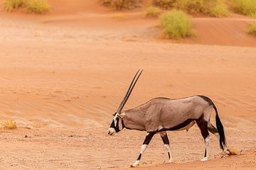 Oryx von Jeroen de Weerd