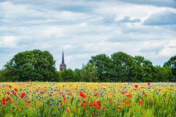 Hollands korenveld met klaprozen en korenbloemen in Brabant van Ron van der Stappen