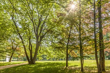 Frühsommer im Kurpark von Bad Homburg von Christian Müringer