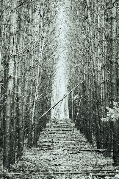 Bospad. van Karel Pops