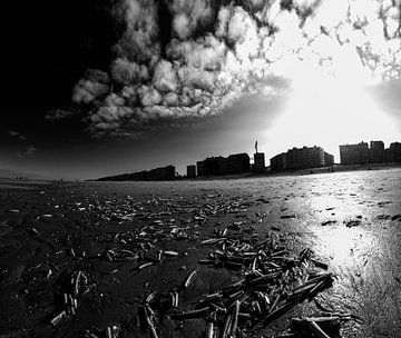 Messermuscheln am Strand von Youri Mahieu