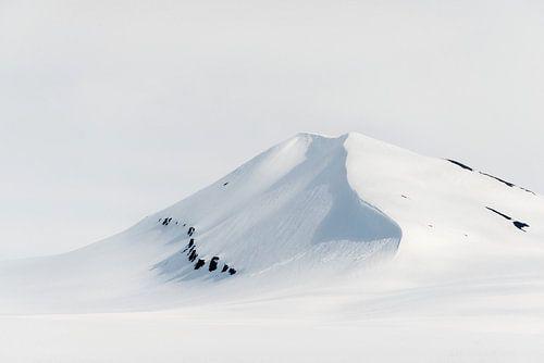 Maagdelijk Spitsbergen