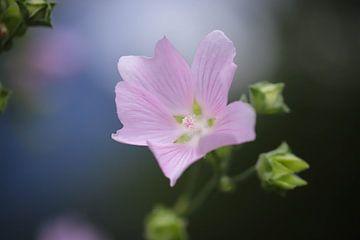 Roze bloem van Isabel van Veen