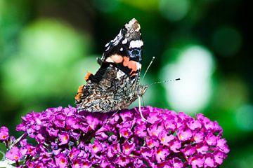 Vlinder op bloem von Ron Pool
