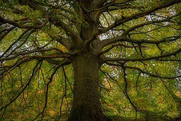 Wereldboom van 1860 van Susan van Etten