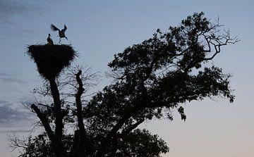 Storchennest kurz vor Einbruch der Dunkelheit von Danny Slijfer Natuurfotografie