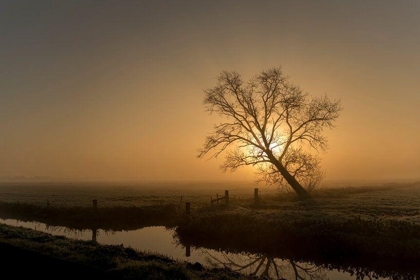 """Serenity Now!"" van Erik Veldkamp"