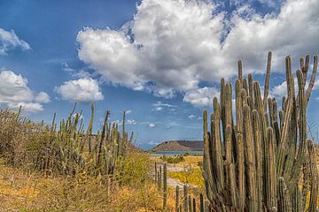 Curacao - sint Willibrord - Cactus van Marly De Kok