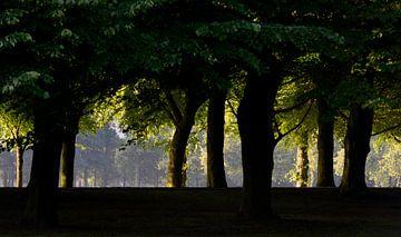 Den Haag Malieveld Bomen van