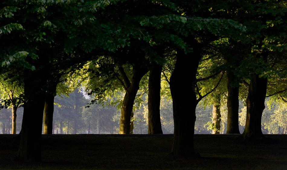 Den Haag Malieveld Bomen