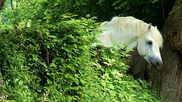 De Witte Hengst van Daphne Photography