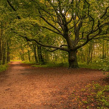 Herfst bospad van Patrick Herzberg