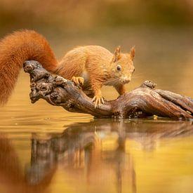 Eekhoorn in de herfst van Gonnie van de Schans