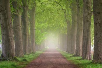 Mist en lanen in het bos van Tomas van der Weijden