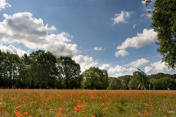 Ein Feld voller Mohnblumen von Lieke van Grinsven van Aarle