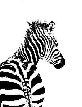 Zebra van Steven Hendrix