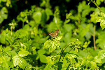 Vlinder in het groen van Dany Tiels
